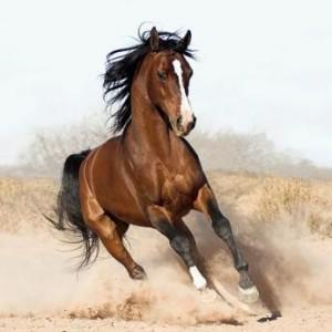 Konjereja
